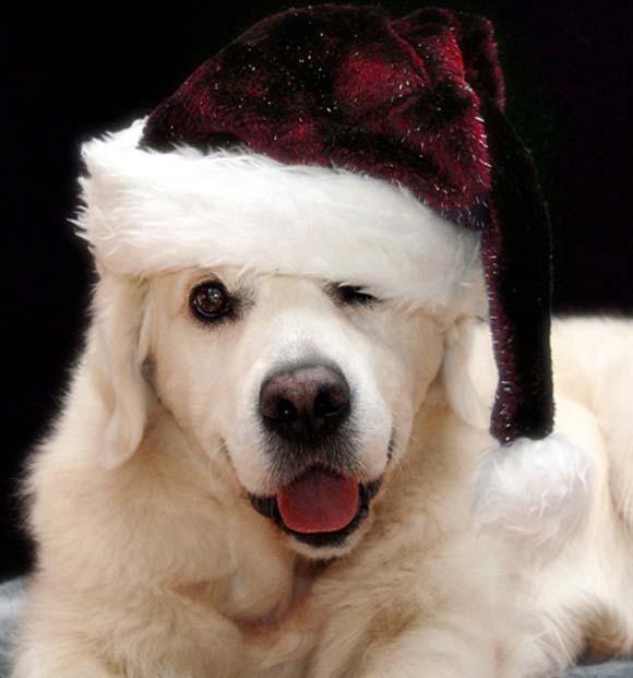 Миленичиња со капата на Дедо Мраз