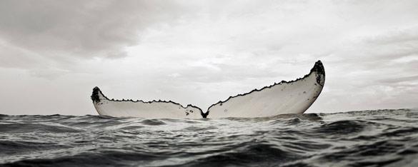 Китови фотографирани одблизу