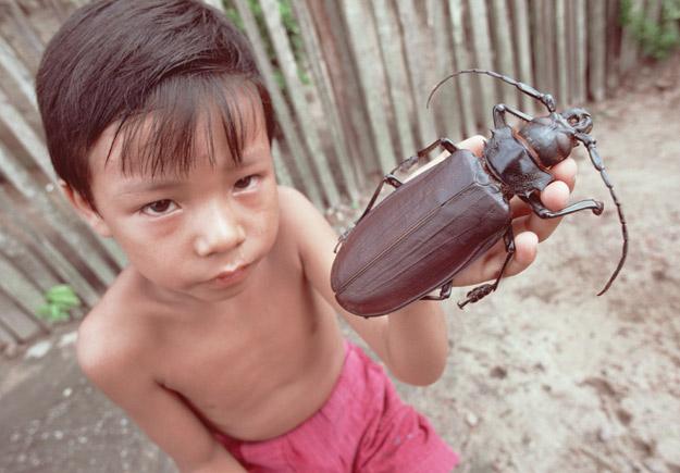 Најголемата бубачка на светот