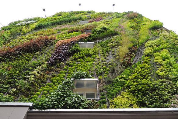 Вертикална ботаничка градина