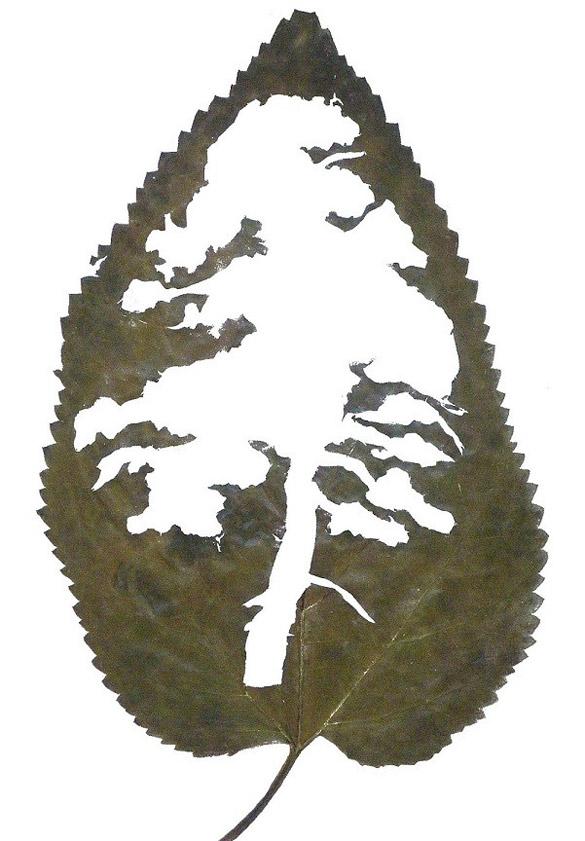 Leaf-art-by-Lorenzo-Duran-iLike-mk-009