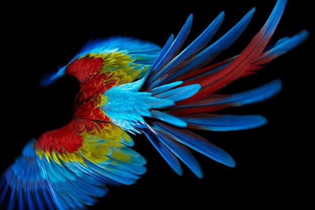 Колоритна фотосторија во која главната улога ја има еден папагал