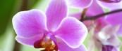 Прекрасни гифови со раскошни цветови