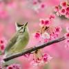 ptici-ilike-mk-004