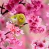 ptici-ilike-mk-005