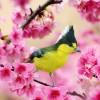ptici-ilike-mk-007
