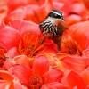 ptici-ilike-mk-022