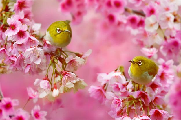 Живописни фотографии со птици