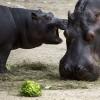 novorodencinja-zoo-iLike-mk-006