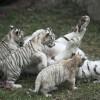 novorodencinja-zoo-iLike-mk-011