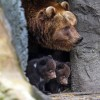 novorodencinja-zoo-iLike-mk-012