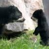 novorodencinja-zoo-iLike-mk-017