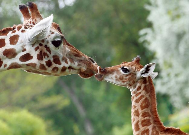 novorodencinja-zoo-iLike-mk-F
