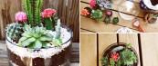 Cactus-Zen-Garden-iLike-mk