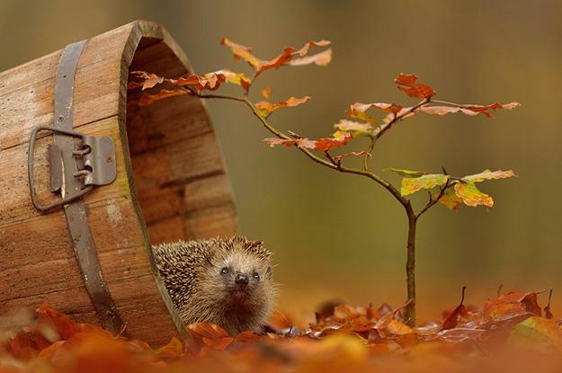 Есенска фото-приказна: Животинчиња низ златните лисја