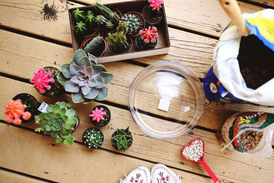 ЧЕКОР 1: обезбедете кактуси, стаклен сад, хумус и камчиња