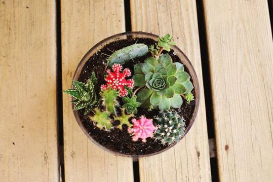 ЧЕКОР 4: Заседете ги кактусите, но бидете особено внимателни со боцките