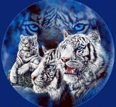 Test-so-povekje-od-10-tigri-iLike-mk-2