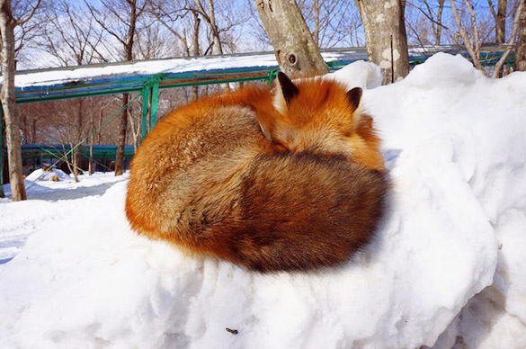 Fox-Village-in-Japan-15