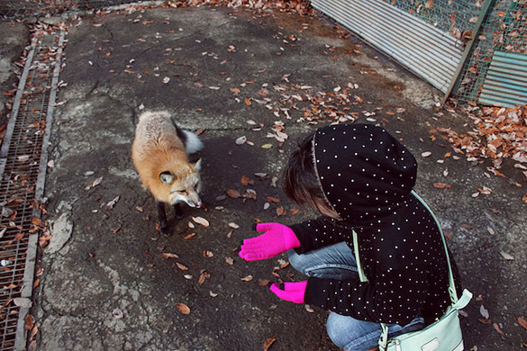 Fox-Village-in-Japan-5