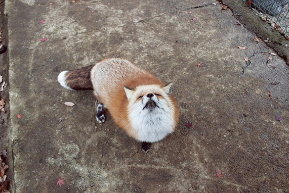 Fox-Village-in-Japan-6
