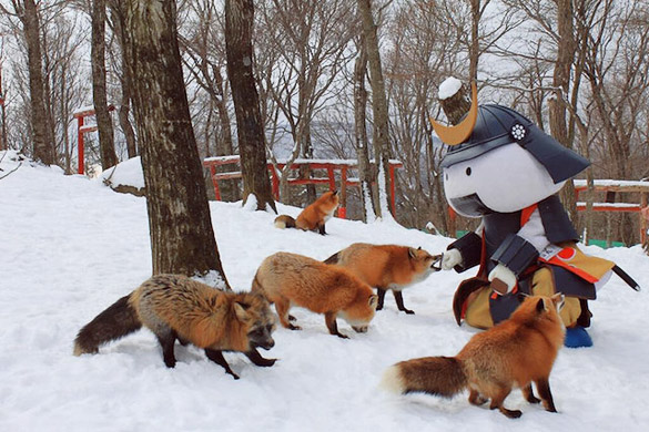 zao-fox-village-japan-32
