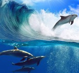 Dolphins-Jumping-iLike-mk
