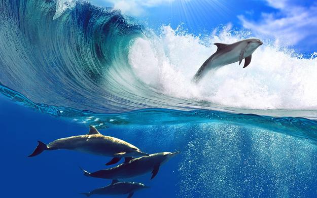Dolphins-Jumping-iLike-mk