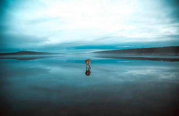 Siberian-Husky-On-A-Frozen-Lake_7