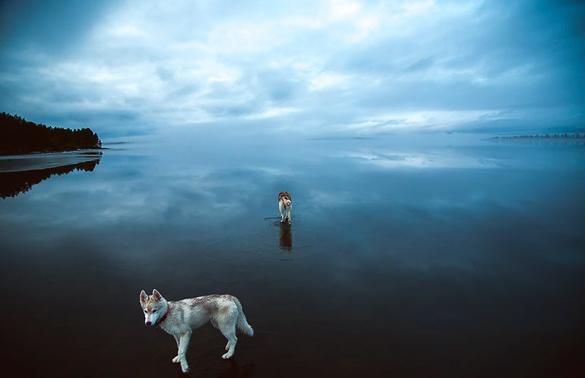 Siberian-Husky-On-A-Frozen-Lake_9