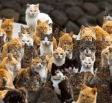The-Japanese-Cat-Island-iLike-mk