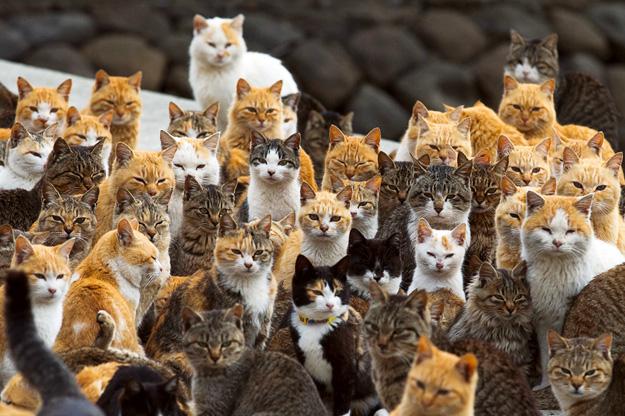 Островот Аошима е дом на мачките
