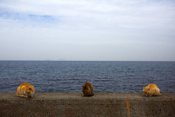 The-Japanese-Cat-Island_1