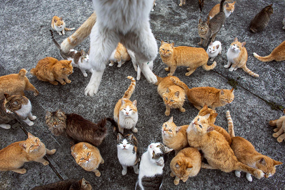 The-Japanese-Cat-Island_10