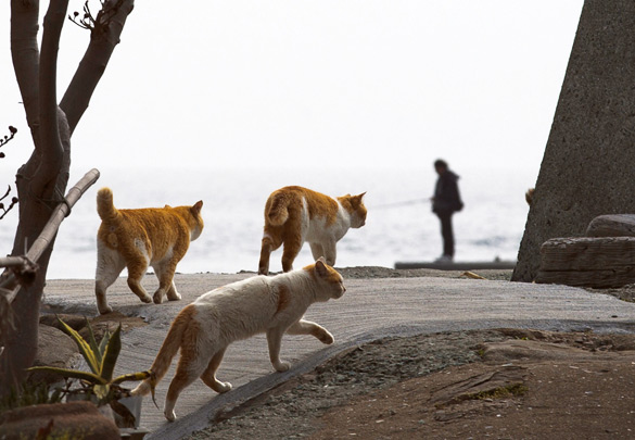 The-Japanese-Cat-Island_8