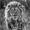 Black-And-White-Animal-Portraits_13