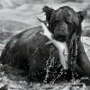 Black-And-White-Animal-Portraits_4
