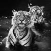 Black-And-White-Animal-Portraits_7