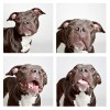 The-Dogs-Photo-Booth_11