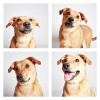 The-Dogs-Photo-Booth_12