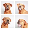 The-Dogs-Photo-Booth_4