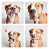 The-Dogs-Photo-Booth_8