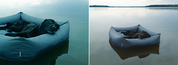 Floating-dog-bed