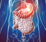 Digestiven_sistem_iLike_mk